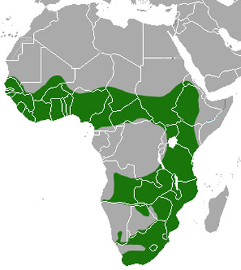 African Clawless Otter Range Map (Africa)