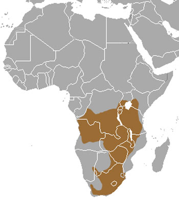 African Striped Weasel Range Map (Africa)