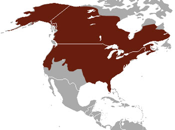 American Mink Native Range Map (North America)