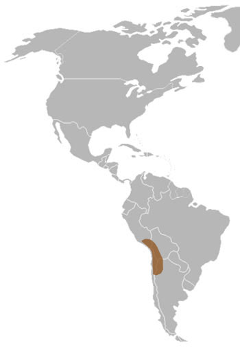 Andean Flamingo Range Map (South America)
