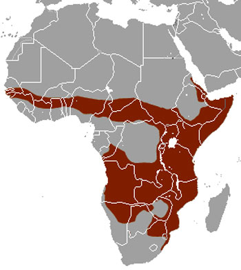 Banded Mongoose Range Map (Africa)