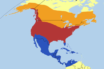 Belted Kingfisher Range Map (N, C & S America)