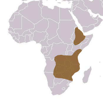 Black Mamba Range Map (Africa)