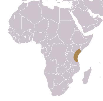 Black & Rufous Elephant Shrew Range Map (Africa)