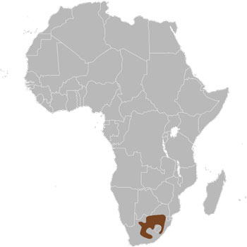 Black Wildebeest Range Map (South Africa)