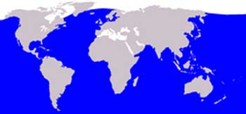 Blue Whale Range Map (Worldwide)