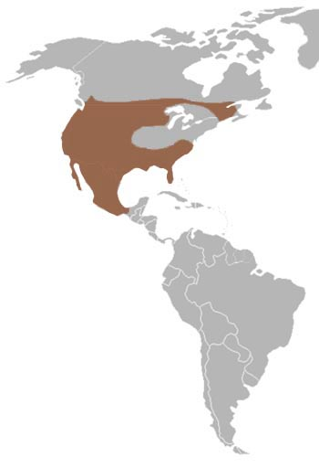 Bobcat Range Map (America)