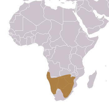 Brown Hyena Range Map (Africa)