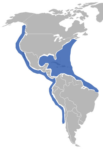 Brown Pelican Range Map (Americas)