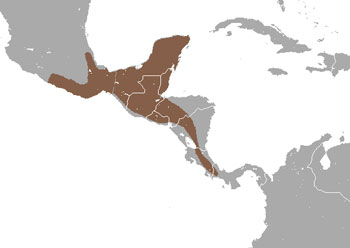 Cacomistle Range Map (Central & South America)