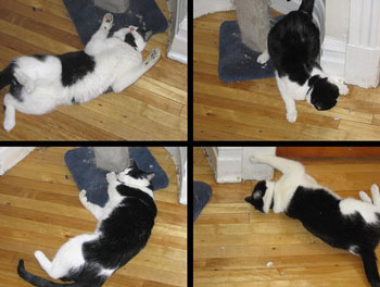 The effects of Catnip