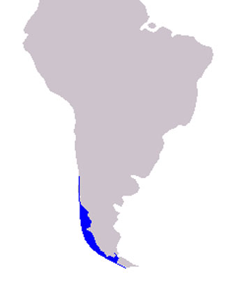 Chilean Dolphin Range Map (Coastal Waters - Chile)