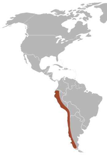 Culpeo Fox Range Map (South America)