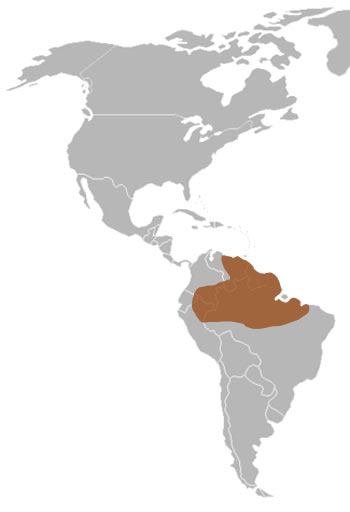 Emerald Tree Boa Range Map (N South America)