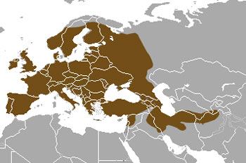 Eurasian Badger Range Map (Europe to East Asia)