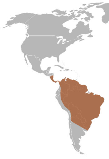 Giant Anteater Range Map (Central to South America)