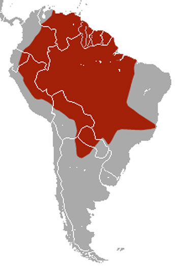 Giant Armadillo Range Map (South America)