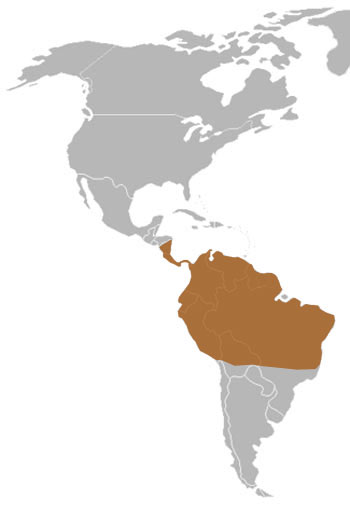 Hoffmann's Two-Toed Sloth Range Map (C & S America)