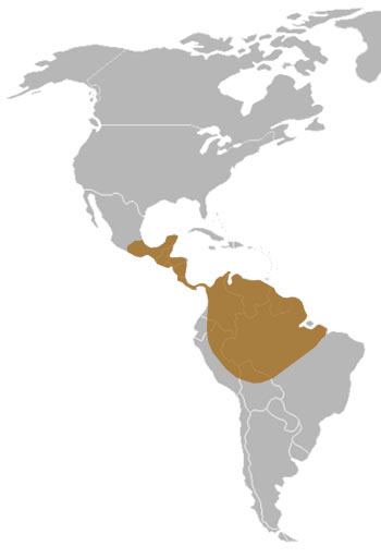 Kinkajou Range Map (S Mexico to S America)