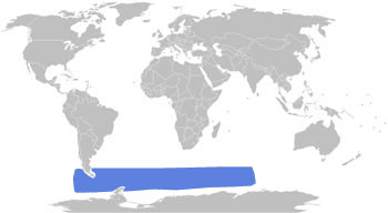Macaroni Penguin Range Map (S Chile, S Atlantic & S Indian Oceans)
