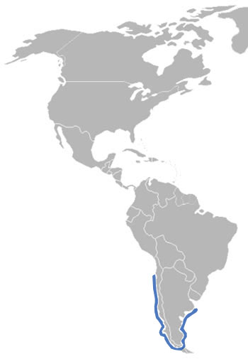 Magellanic Penguin Range Map (South America)