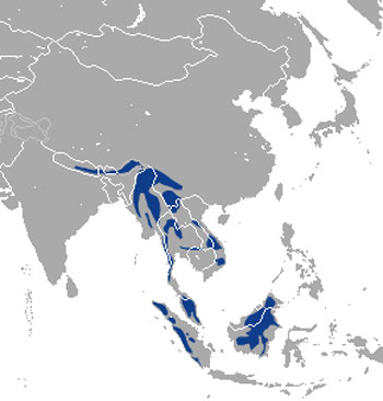 Marbled Cat Range Map (S to S E Asia)