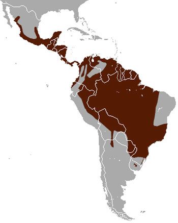 Margay Range Map (North, Central & South America)