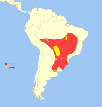 Marsh Deer Range Map (South America)