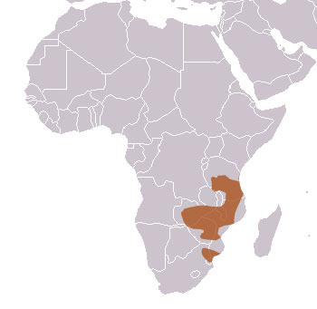 Meller's Mongoose Range Map (Africa)