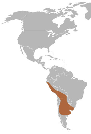 Molina's Hog-Nosed Skunk Range Map (S America)