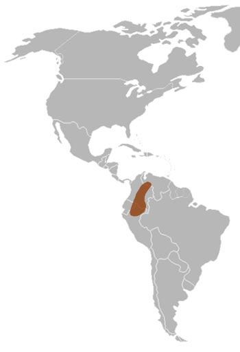 Mountain Coati Range Map (South America)