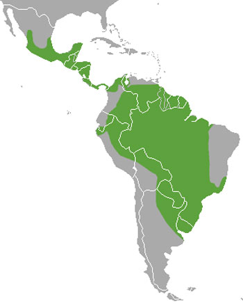 Neotropical Otter Range Map (Central & South America)