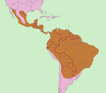 Ocelot Range Map (South USA, Central & South America)