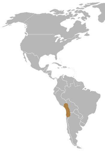 Puna Flamingo Range Map (South America)