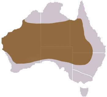 Red Kangaroo Habitat Red Kangaroo Range Map