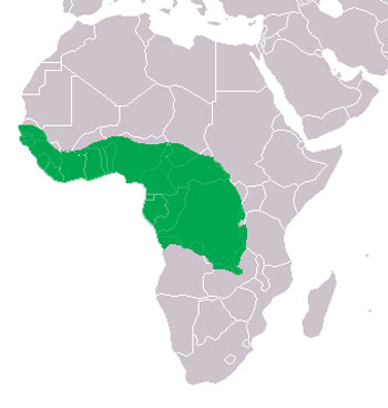 Slender-Snouted Crocodile Range Map (Africa)