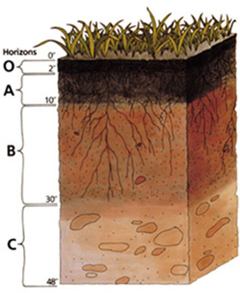 Soil fertilizers the animal files for 4 parts of soil