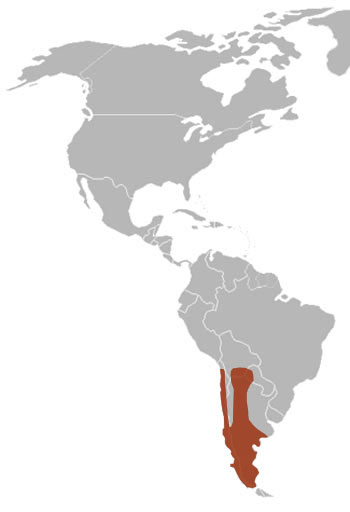 South American Grey Fox Range Map (South America)