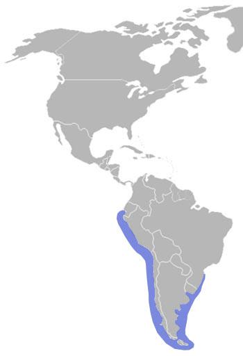 South American Sea Lion Range Map (S America)
