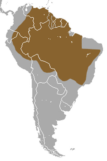 Southern Naked-Tailed Armadillo Range Map (South America)