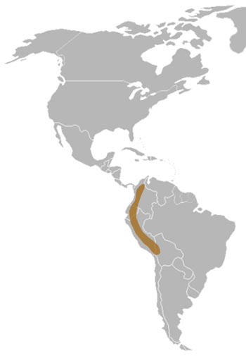 Spectacled Bear Range Map (South America)