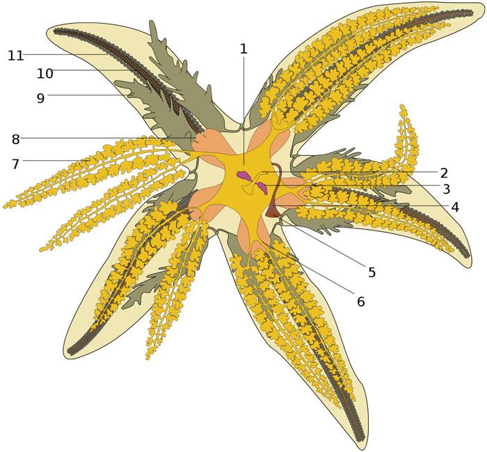 Anatomy of a star