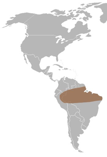 Surinam Toad Range Map (South America)