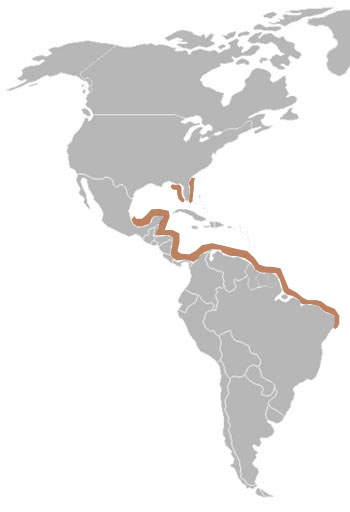 West Indian Manatee Range Map (Americas)