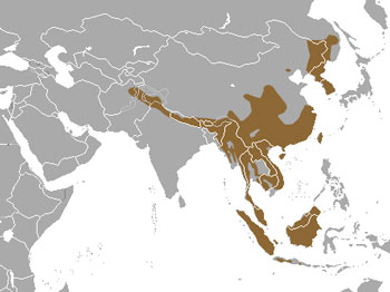 Yellow-Throated Marten Range Map (Asia)