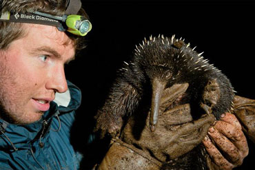 Zoologist Kristofer Helgen comes face-to-face with a long-beaked echidna in the wild on the island of New Guinea.