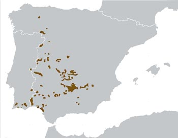 Iberian Lynx Range Map (South West Europe)