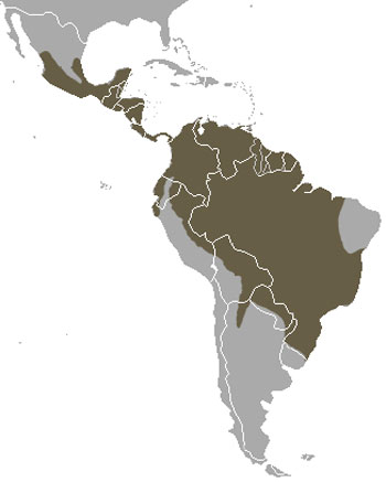 Tayra Range Map (Central & South America)