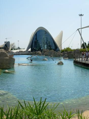 Valencia aquarium l 39 oceanogr fic the animal files for Aquarium valencia precio